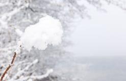 Sluit omhoog van een tak met sneeuw wordt behandeld die Stock Afbeelding