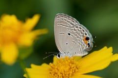 Sluit omhoog van een vlinder Royalty-vrije Stock Foto's