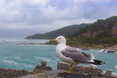 Sluit omhoog van een zeemeeuw met stormachtige overzees stock afbeelding