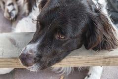 Sluit omhoog van een zoete hond royalty-vrije stock afbeeldingen