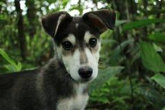 Sluit omhoog van een zwarte met wit onschuldig en leuk hoofd van oud puppy met bos op de achtergrond stock fotografie
