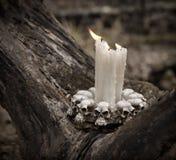 Sluit omhoog van enge kaarsen in het bos Stock Foto's