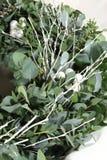 Sluit omhoog van eucalyptuskroon Royalty-vrije Stock Foto's