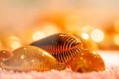 Sluit omhoog van exotische spiraalvormige overzeese shells met vage achtergronden Mooie bokeh en zachte verlichting stock fotografie