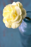 Sluit omhoog van Gele bloem Stock Afbeelding
