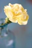 Sluit omhoog van Gele bloem Stock Foto's
