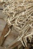 Sluit omhoog van gemaaide tarwe op een kar alvorens met historische dorser te dorsen stock foto's