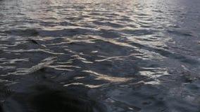 Sluit omhoog van golvende waterspiegel van meer, laag hoekschot stock video