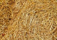 Sluit omhoog van gouden hooi die stro tonen stock afbeelding