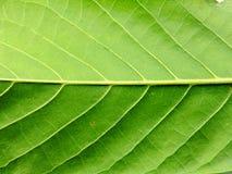 Sluit omhoog van groene bladachtergrond Royalty-vrije Stock Foto's