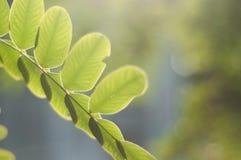 Sluit omhoog van groene bladeren Stock Afbeelding