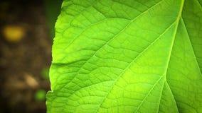 Sluit omhoog van Groene Textuur in Blad stock footage