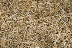 Sluit omhoog van grond Textuur van stro Geel droog de herfstgras ter plaatse De textuur van hooi stock afbeeldingen