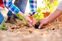 Sluit omhoog van handen, hoger paar die weinig zaailing planten royalty-vrije stock afbeeldingen
