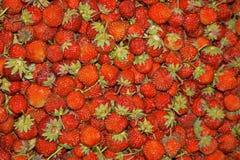 Sluit omhoog van heel wat verse rode rijpe tuinaardbeien stock fotografie