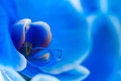 Sluit omhoog van het centrum van een Blauwe Phalaenopsis-Orchidee Stock Foto's