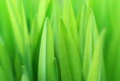 Sluit omhoog van het groene gras Royalty-vrije Stock Afbeeldingen