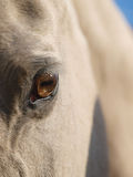 Sluit omhoog van het Oog van een Paard Royalty-vrije Stock Fotografie