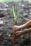 Sluit omhoog van het planten Royalty-vrije Stock Afbeelding
