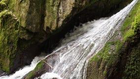 Sluit omhoog van het wilde zwarte bos van de waterdaling royalty-vrije stock foto
