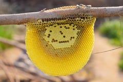 Sluit omhoog van honingbijen op honingskam royalty-vrije stock afbeeldingen
