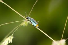 Sluit omhoog van insect op installatie Stock Foto's