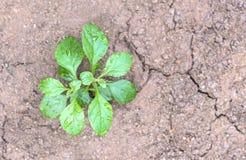 Sluit omhoog van jonge plant het ontspruiten Royalty-vrije Stock Afbeelding