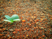 Sluit omhoog van jonge plant het ontspruiten Stock Afbeelding