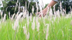 Sluit omhoog van jonge vrouwenhand die het raken van grasbloem Het Concept van de liefdeaard stock footage