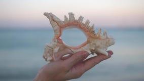Sluit omhoog van jonge vrouwenhand houdend grote shell op het strand stock footage