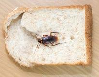 Sluit omhoog van kakkerlak op een Geheel tarwebrood stock foto