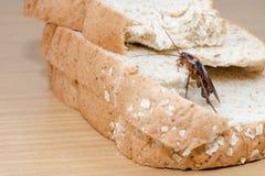 Sluit omhoog van kakkerlak op een Geheel tarwebrood royalty-vrije stock afbeeldingen