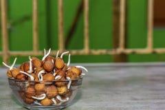 Sluit omhoog van Kekers of het gramspruiten van Bengalen op een kom met groene achtergrond royalty-vrije stock foto's