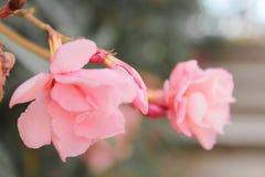Sluit omhoog van kleine roze rozen met groene achtergrond stock foto