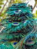 Sluit omhoog van kleurrijk oogpatroon op pauwstaart stock fotografie