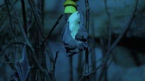 Sluit omhoog van knuppels in de nacht stock footage