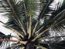 Sluit omhoog van kokospalmbehang Stock Afbeeldingen