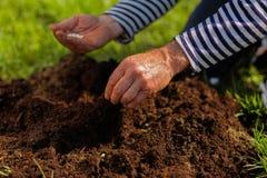 Sluit omhoog van mannelijke handen die grond dichtbij enkel geplant boom verrijken stock afbeelding
