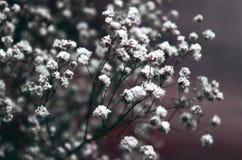 Sluit omhoog van mooie dromerige tuin Gypsophila of baby-Adem bloemen royalty-vrije stock foto