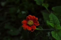 Sluit omhoog van mooie oranje bloem in tuin openlucht stock afbeelding