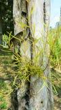 Sluit omhoog van nieuwe rode bladspruiten Royalty-vrije Stock Fotografie