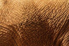 sluit omhoog van olifantshuid Royalty-vrije Stock Afbeeldingen