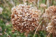 Sluit omhoog van Oranje Flora Royalty-vrije Stock Foto