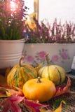 Sluit omhoog van oranje, gele en groene pompoenen en de herfstbloemen stock afbeelding