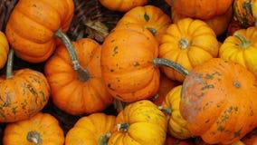 Sluit omhoog van oranje pompoenen in de mand De herfst, dalingsachtergrond Oogst en Dankzeggingsconcept Langzame motie HD stock videobeelden