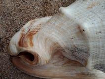 Sluit omhoog van Overzeese shell geweven behang als achtergrond, strand Oceaan royalty-vrije stock foto's