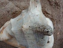 Sluit omhoog van Overzeese shell geweven behang als achtergrond, strand Oceaan stock foto