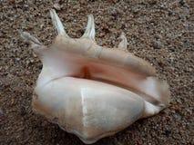 Sluit omhoog van Overzeese shell op het zand geweven behang als achtergrond, strand Oceaan royalty-vrije stock afbeelding
