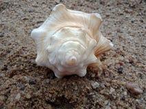 Sluit omhoog van Overzeese shell op het zand geweven behang als achtergrond, strand Oceaan stock fotografie