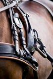Sluit omhoog van paard getrokken vervoerkopspijker Royalty-vrije Stock Foto
